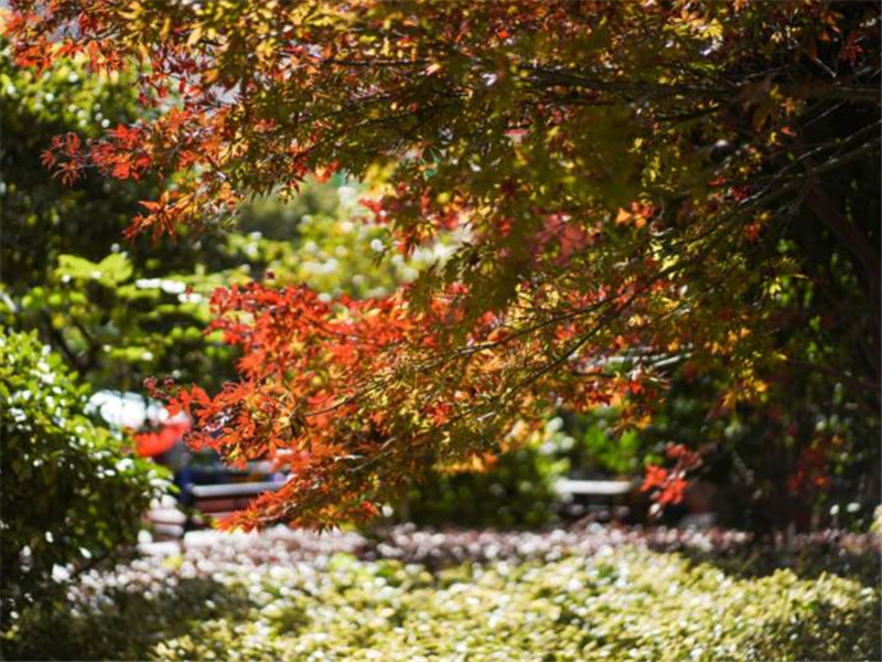 <b>【图集】亚洲超级大盘花果园的小区里 寻觅那些迷人的秋色童话</b>